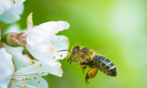 Bee - beautysecrets.agency